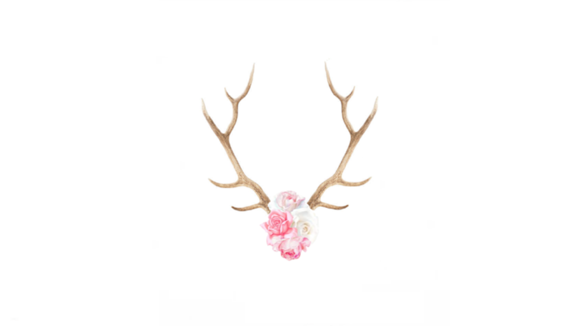 Little Stag
